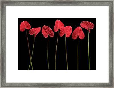 Botanical Hearts Framed Print