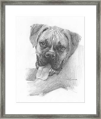 Boxer Dog Pencil Portrait Framed Print by Mike Theuer