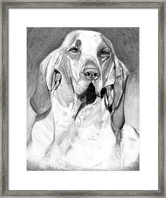 Bracco Italiano Dog Portrait Framed Print by Olde Time  Mercantile