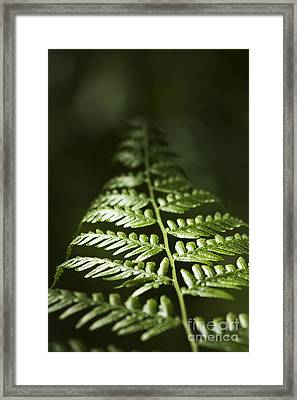 Bracken Fern Framed Print