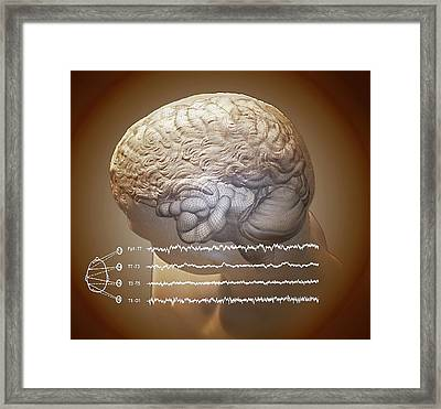 Brain And Hippocampus Framed Print