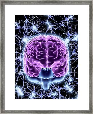 Brain And Nerve Cells Framed Print
