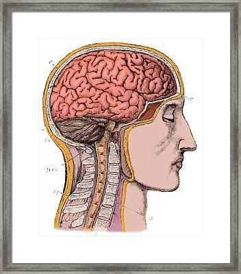 Brain From Right Side, 1883 Framed Print