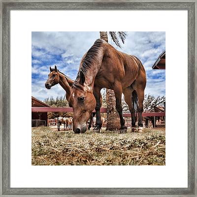 Break Time Framed Print by Kelley King