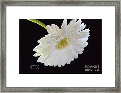 Framed Print featuring the photograph Bright White Gerber Daisy # 2 by Jeannie Rhode