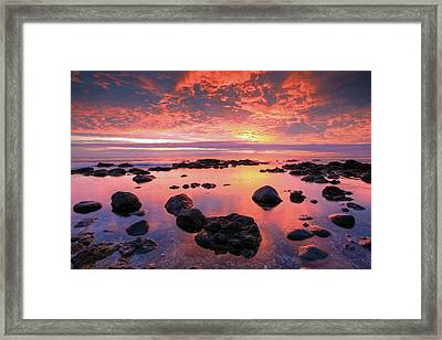 Brimstone Framed Print by Brad Grove