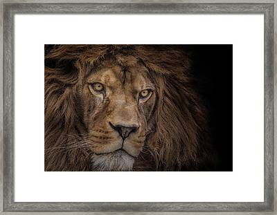 Brink Of Extinction Framed Print by Ashley Vincent