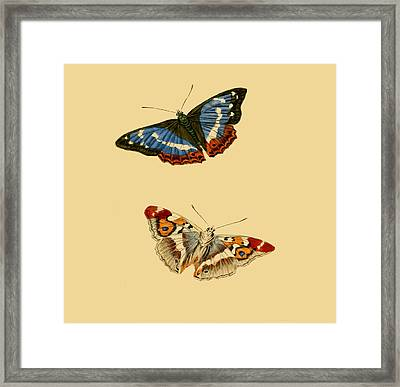 British Butterflies Framed Print by Philip Ralley