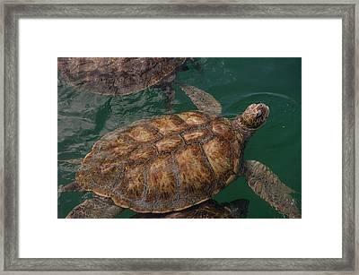 British West Indies, Cayman Islands Framed Print