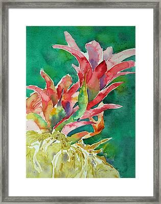 Bromeliad Framed Print
