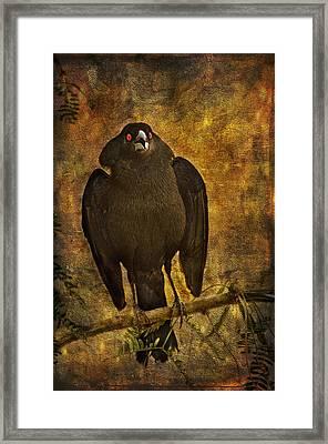 Bronzed Cowbird Framed Print by Barbara Manis