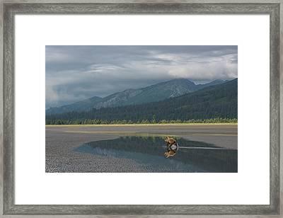 Brown Bear, Ursus Arctos, At Silver Framed Print by Bob Smith
