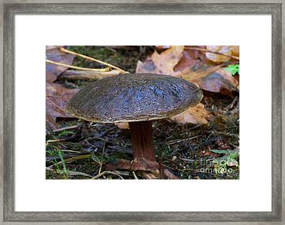 Framed Print featuring the photograph Brown Toadstool by Chalet Roome-Rigdon