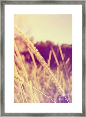 Brush Grass Framed Print by Jorgo Photography - Wall Art Gallery