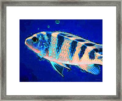 Bubbles Fish Art By Sharon Cummings Framed Print by William Patrick