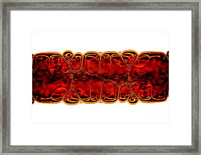 Bubbles Framed Print by Michal Boubin