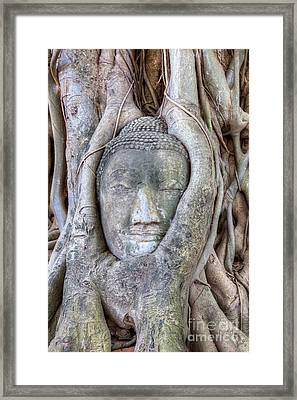 Buddha Head In Tree Framed Print by Fototrav Print