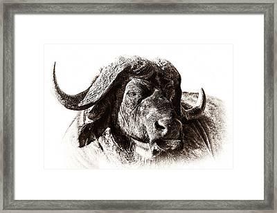 Buffalo Sketch Framed Print by Mike Gaudaur