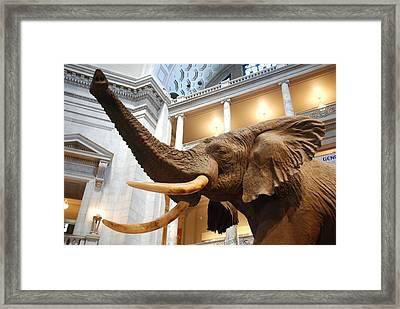 Bull Elephant In Natural History Rotunda Framed Print