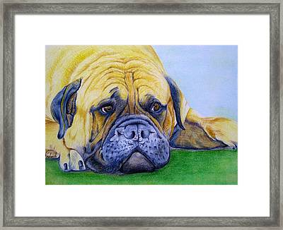 Bulldog Framed Print by Prashant Shah