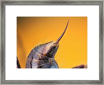 Bullet Ant Stinger Framed Print