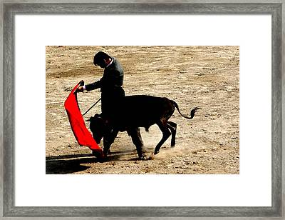 Bullfighter In Training Framed Print