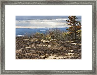 Burnt Blueberry Field In Maine Framed Print by Keith Webber Jr