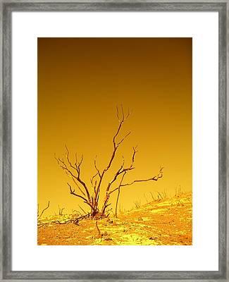 Burnt Bush Framed Print