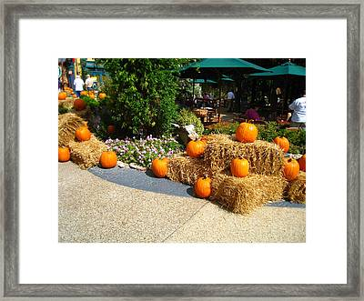 Busch Gardens - 121210 Framed Print by DC Photographer