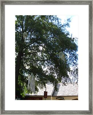 Busch Gardens - 12128 Framed Print by DC Photographer