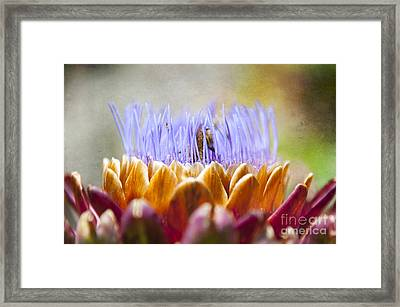 Busy Bee Framed Print by Svetlana Sewell