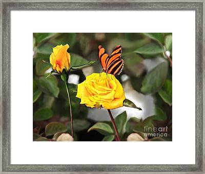 Busy Butterfly Framed Print