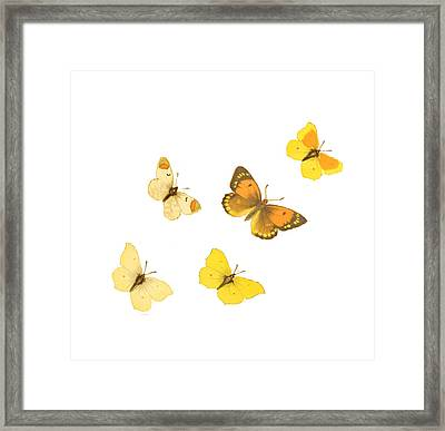 Butterflies Framed Print by Philip Ralley
