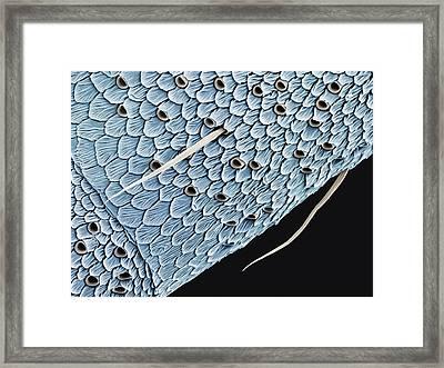Butterfly Antenna Framed Print