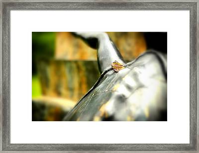 Butterfly Framed Print
