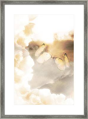 Butterfly Dreams Framed Print by Jorgo Photography - Wall Art Gallery