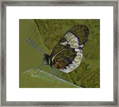 Butterfly Green Framed Print
