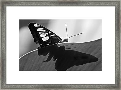 Butterfly II Framed Print by Ron White