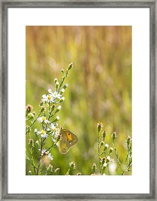 Butterfly In A Field Of Flowers Framed Print