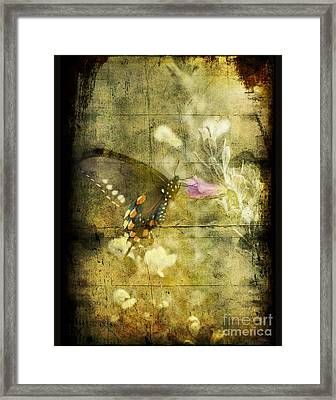 Butterfly Framed Print by Jim Wright