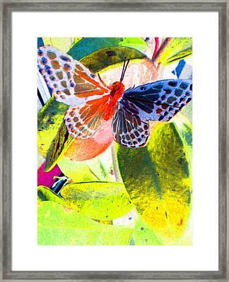 Butterfly  Framed Print by Nico Bielow