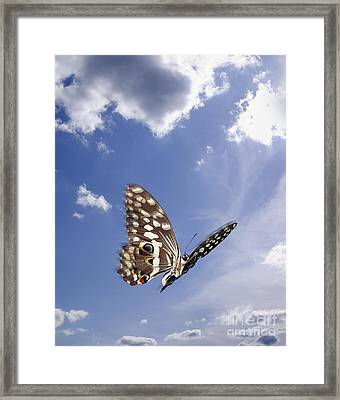 Butterfly Framed Print by Tony Cordoza