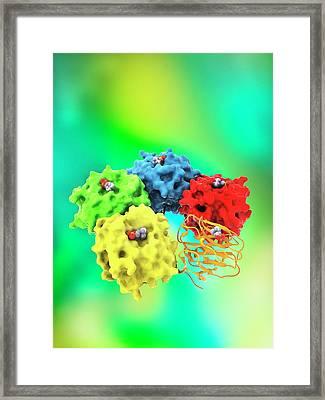 C-reactive Protein Molecule Framed Print by Ramon Andrade 3dciencia
