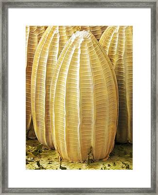 Cabbage White Butterfly Eggs, Sem Framed Print by Power And Syred