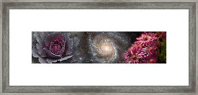 Cabbage With Galaxy And Pink Flowers Framed Print