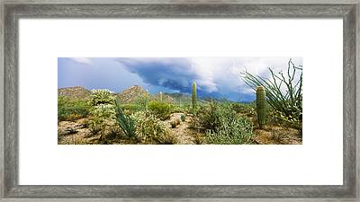 Cacti Growing At Saguaro National Park Framed Print by Panoramic Images
