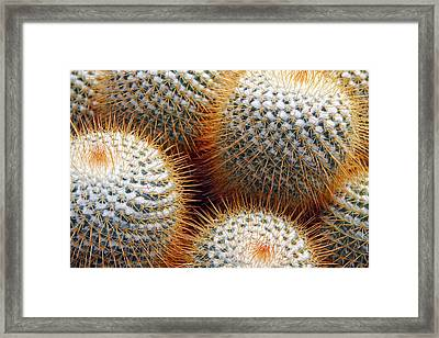 Cactus Framed Print by Jim McCullaugh
