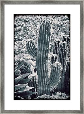Cactus Land Framed Print by Kelley King