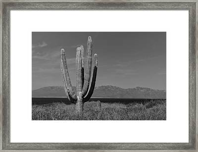 Cactus On Isla Cerralvo Framed Print