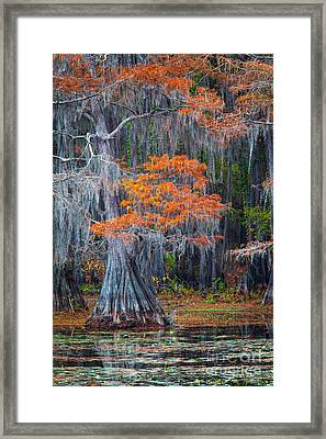 Caddo Lake Autumn Framed Print